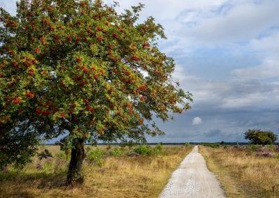 Trouwen in Drenthe